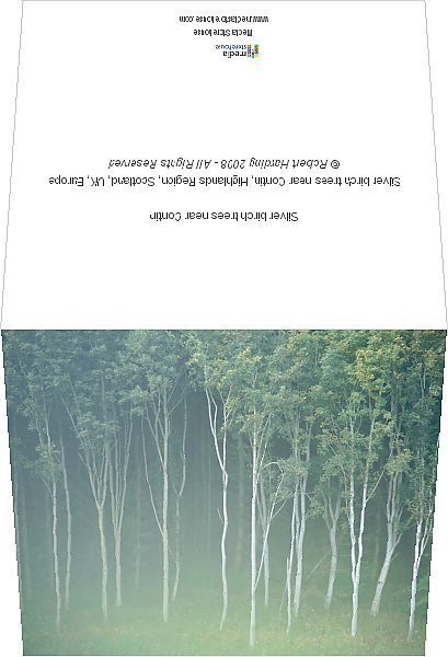 Greetings Card-Silver birch trees near Contin-Photo Greetings Card made in the USA