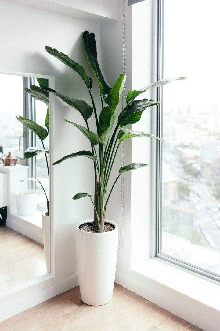 Indoor house plants how to keep house plants alive 32  Design And Decoration
