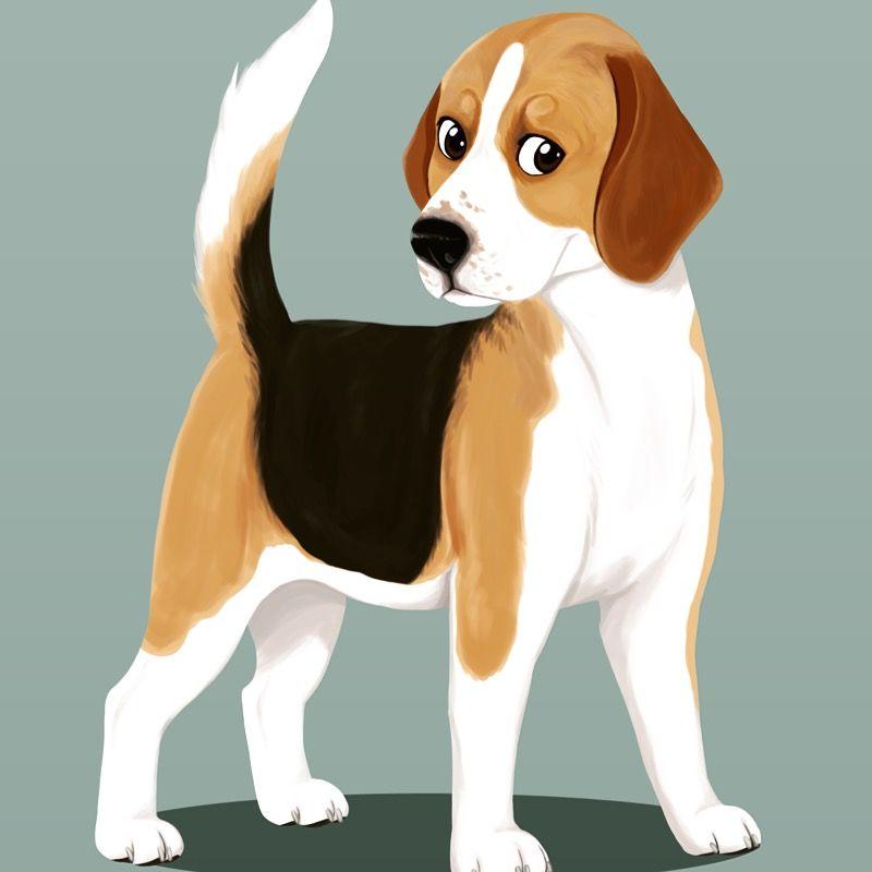 Beagle by Dany Gonzalez Art (www.mexicanine.com) #beagle #dog #canine #puppy…