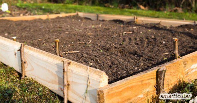 Beet statt Rasen: So wird der Rasen zum Gemüsebeet - ohne Umgraben