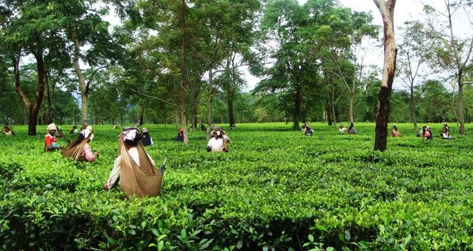 10 Best Tourist Destinations In Assam Best Tourist Destinations