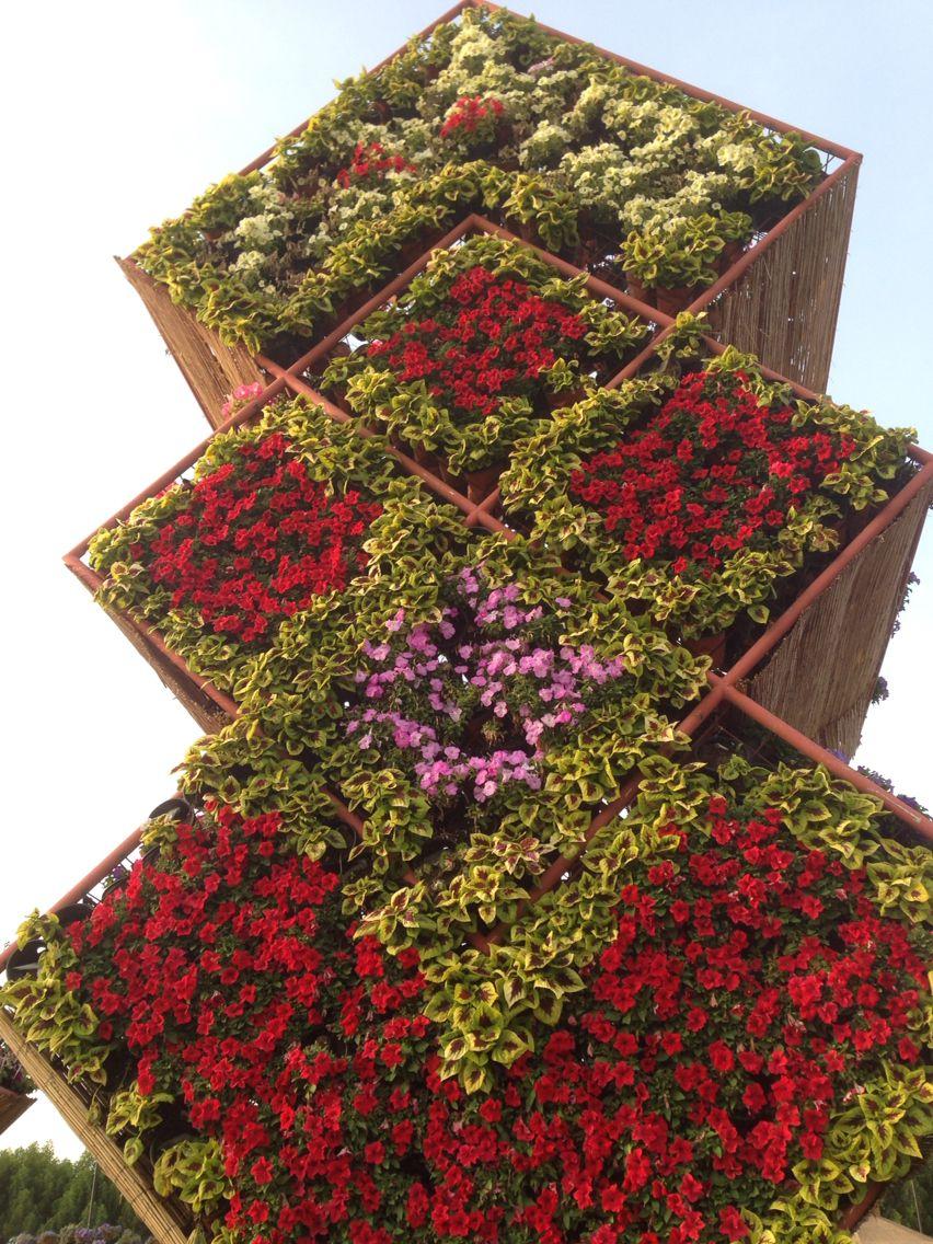 Dubai Miracle Garden, Dubai, UAE . Photography Juhaina Al