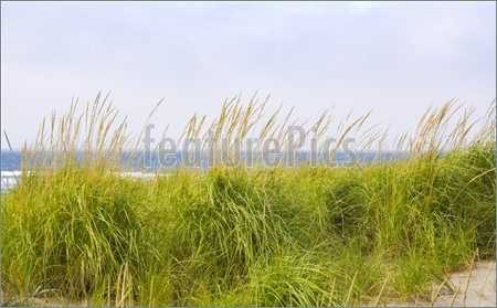 Straw Grass with ocean background