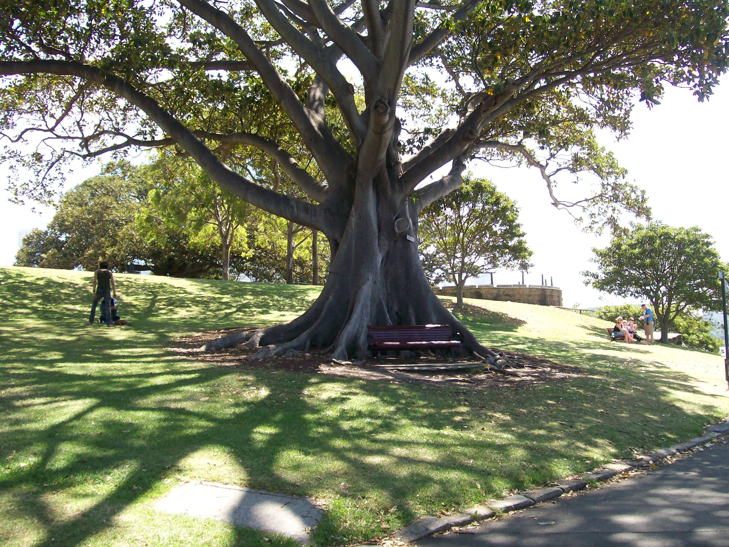 Unusual tree in Sydney 2009 Australia Garden, Outdoor