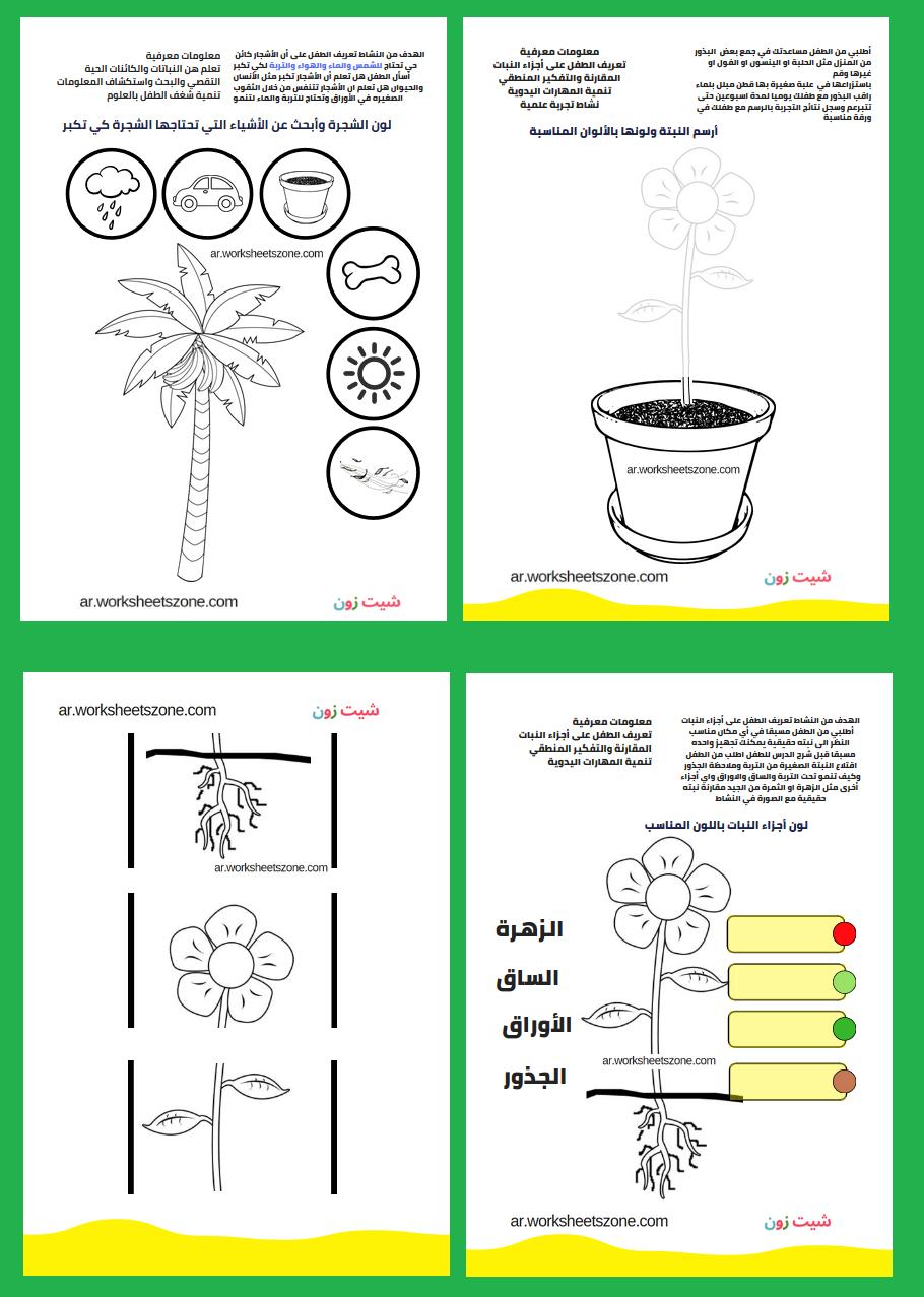 اجزاء النبات بالصور للاطفال تلوين وأنشطة تفاعلية أوراق عمل للأطفال شيت زون Parts Of A Plant Worksheets For Kids Free Kids