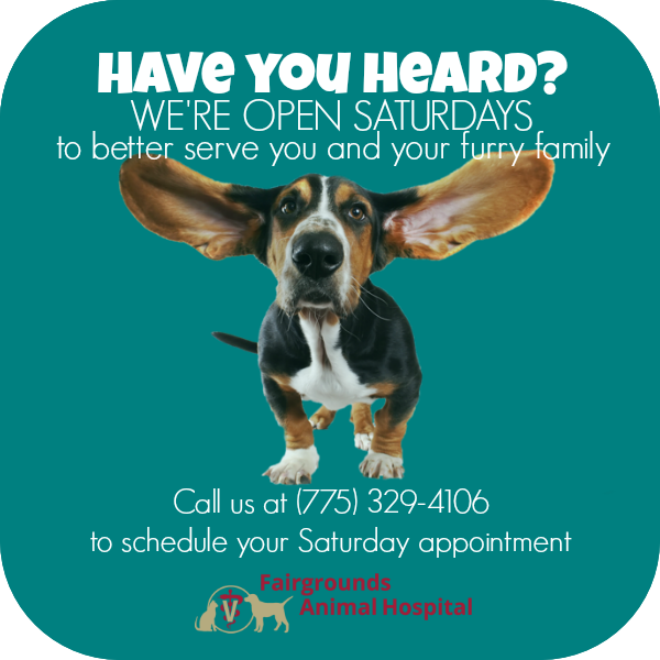 Fairgrounds Animal Hospital Is Excited To Announce Our New Extended Weekend Hours Beginning June 23 2018 Fairgr Animal Hospital Veterinary Care Veterinarian