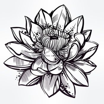 Tatouage Fleur Vector Set Of Hand Drawn Fleur De Lotus Lily Motif Tatouage L Ment De Design