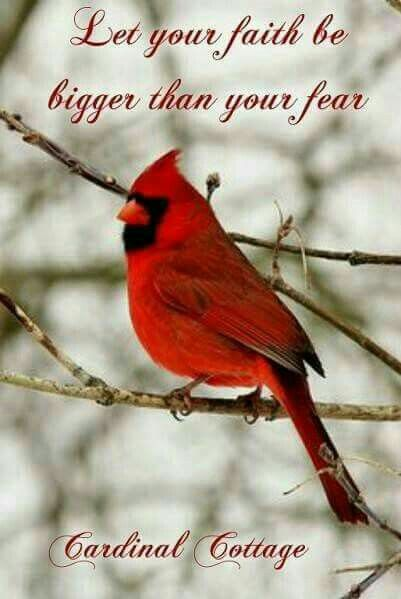 Quotes About Birds Pinpat Fann Fink On Cardinal Birds  Pinterest  Cardinals Bird .