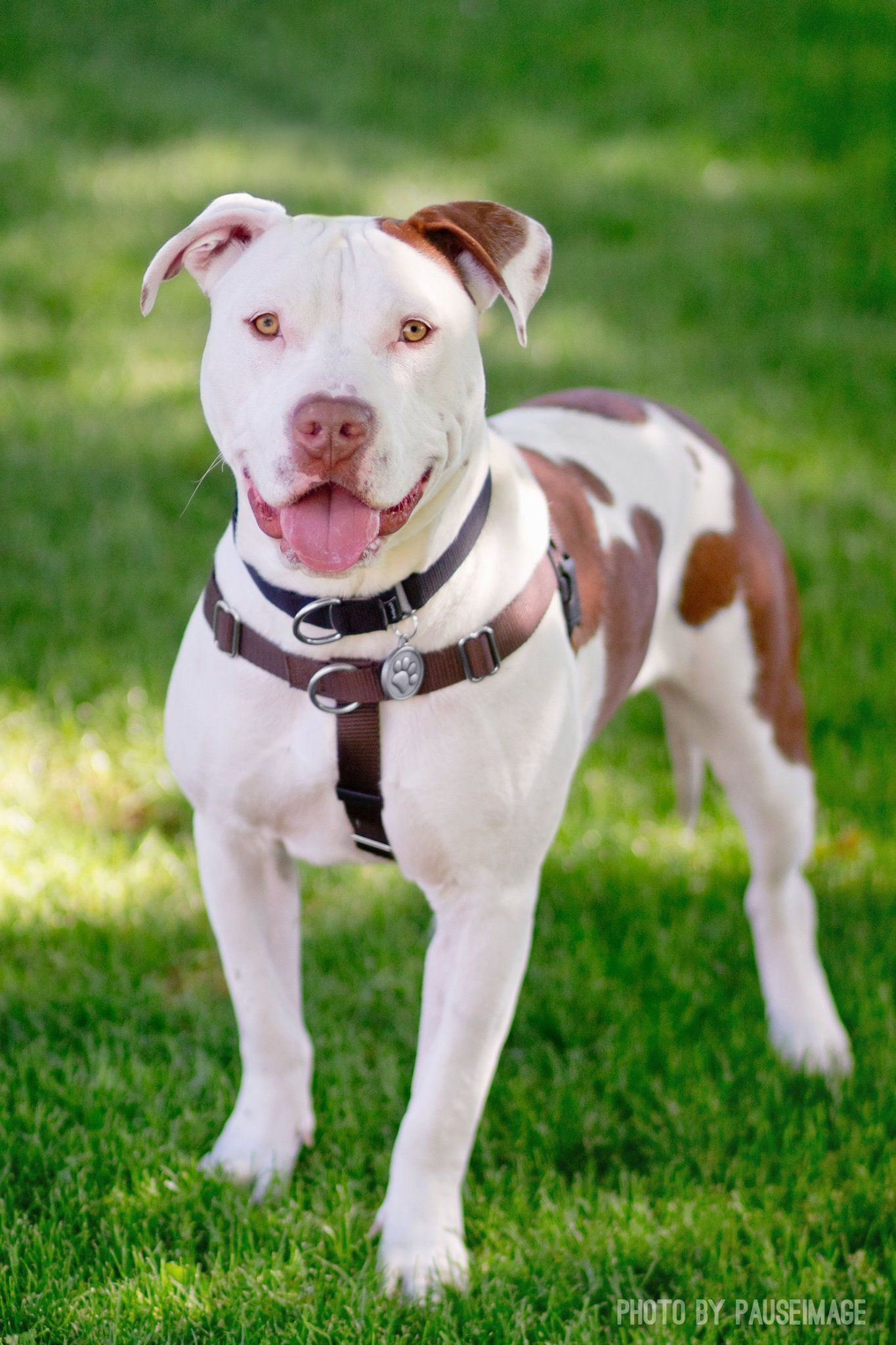 2nd Chance Dog Rescue, Queen Creek Arizona Dog Rescue