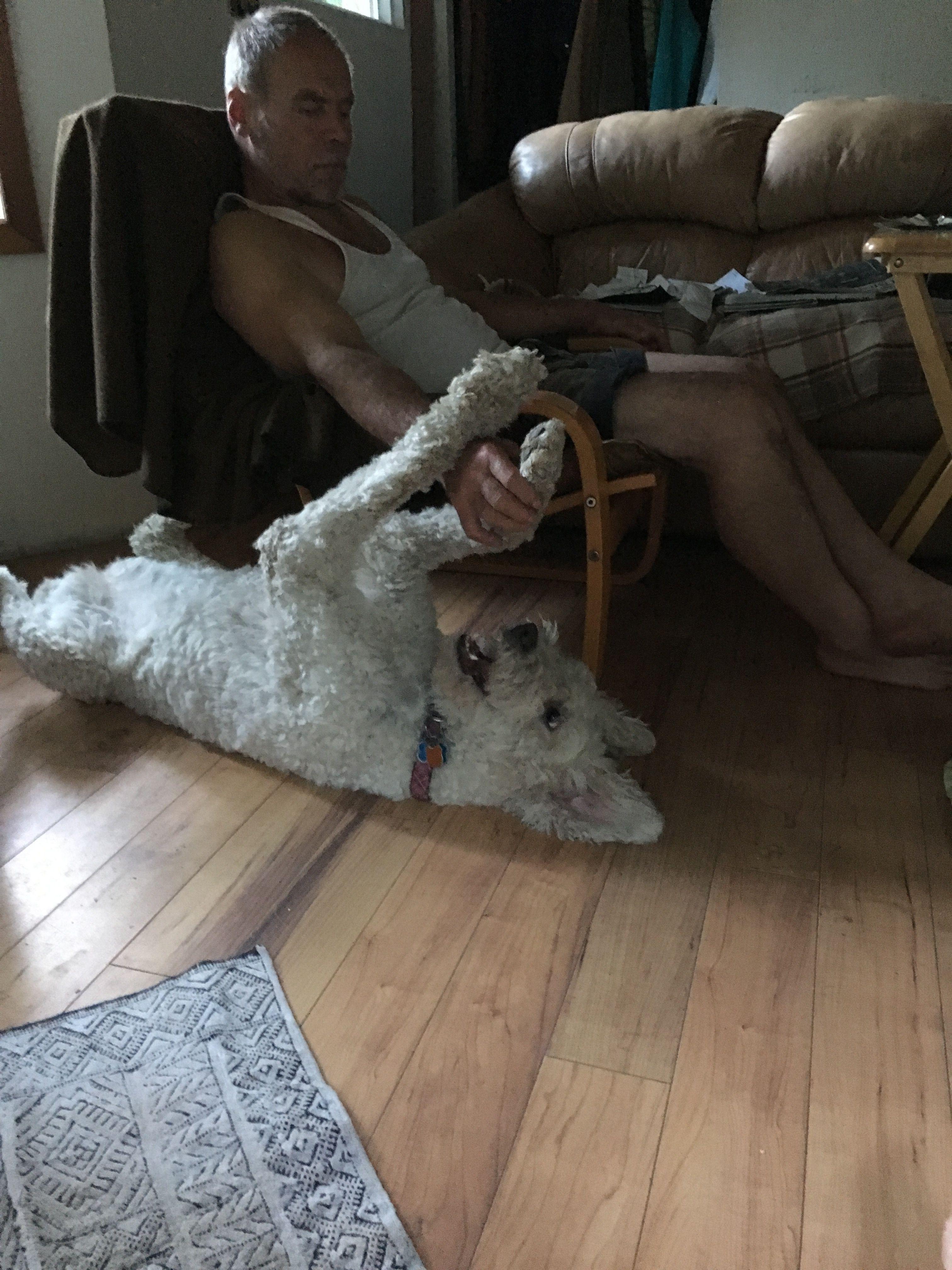 Pin By Shari Parsons On Komondor Komondor Dogs Victoria Bc Canada