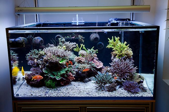 5 3 Theory Reefs Magazine   Aesthetics Of Aquascaping | Reef Tanks |  Pinterest | Aquariums, Reef Tanks And Magazines