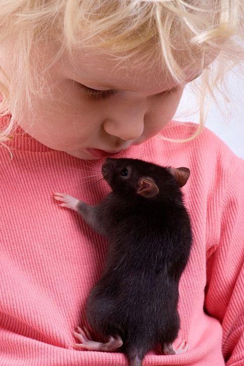 The 5 Worst And 3 Best Pets For Kids That Aren T Cats Or Dogs Babycenter Animals For Kids Cute Rats Baby Rats