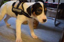 JULIUS, Hund, Mischlingshund in Ungarn