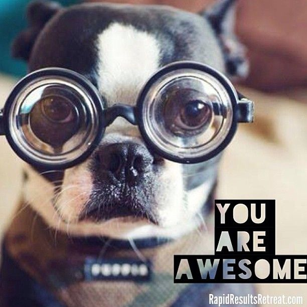 You Re Amazing Dog: You Are Awesome! Great For A Friend! Cute Pup :)