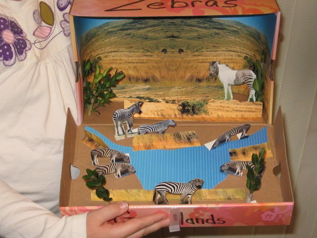 Citaten School Project : Diorama on pinterest dioramas school projects and dolphins