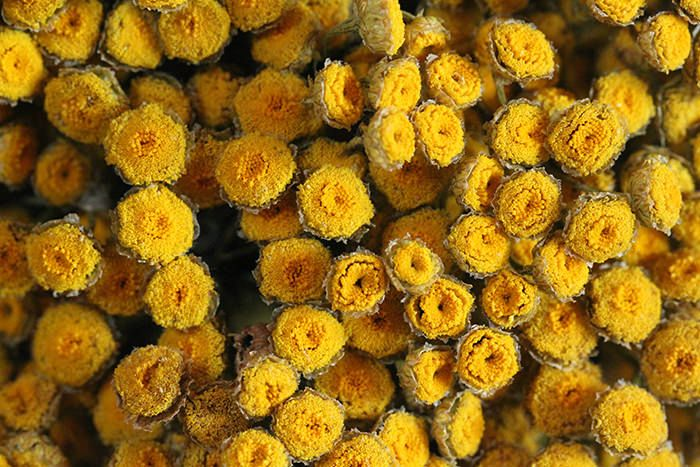 Dried Flowers, Bunch Of Flowers
