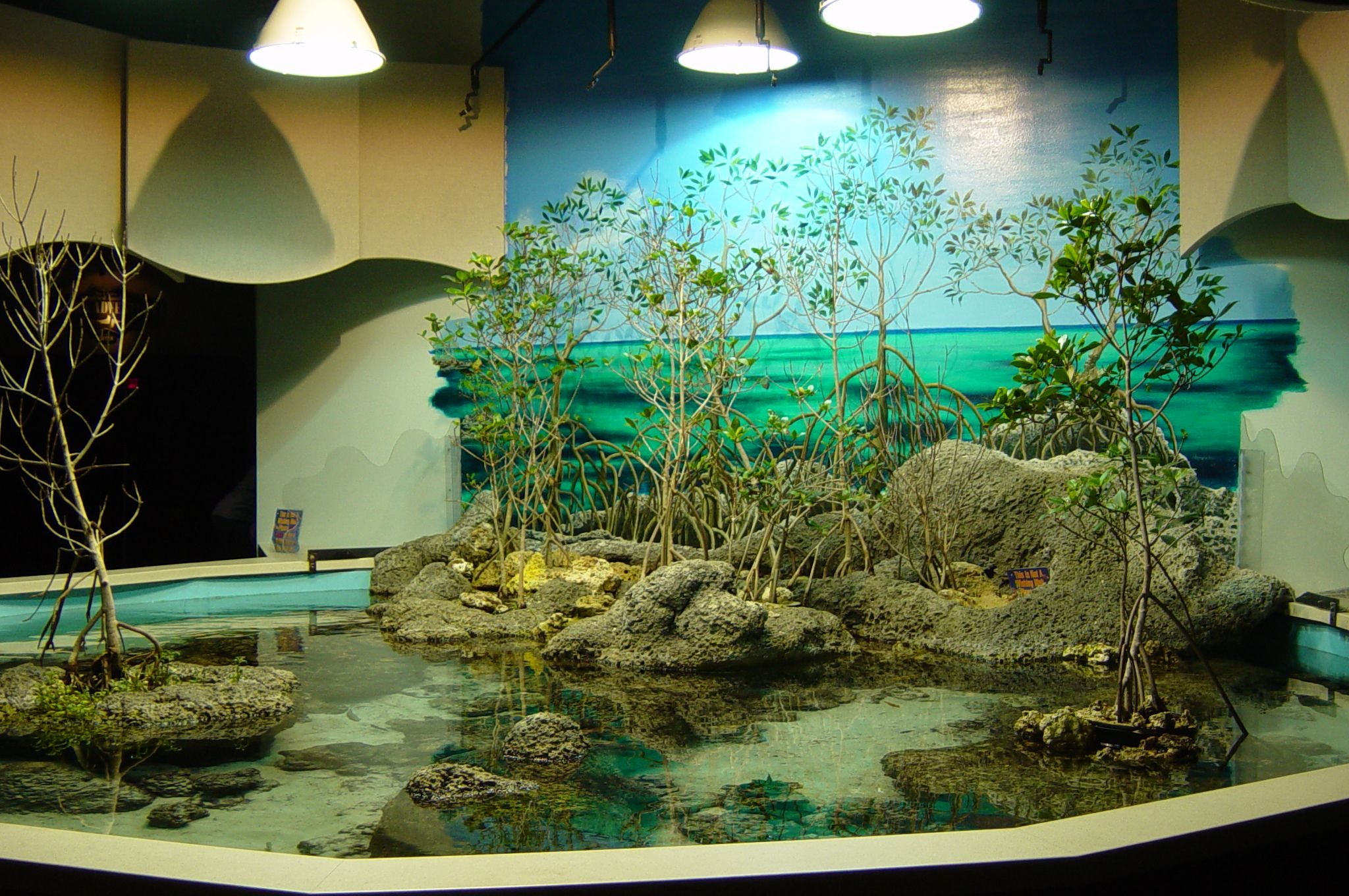 nature center touch tank - google search | touch pools | pinterest
