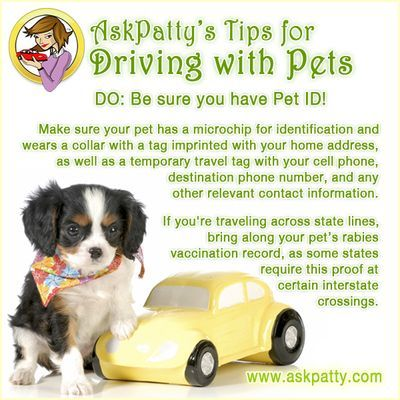 AP-Tips-for-Driving-with-Pets-7