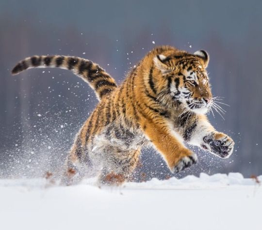 The Beauty of Wildlife