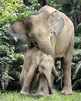 Wild About Borneo - Images | donna racheal