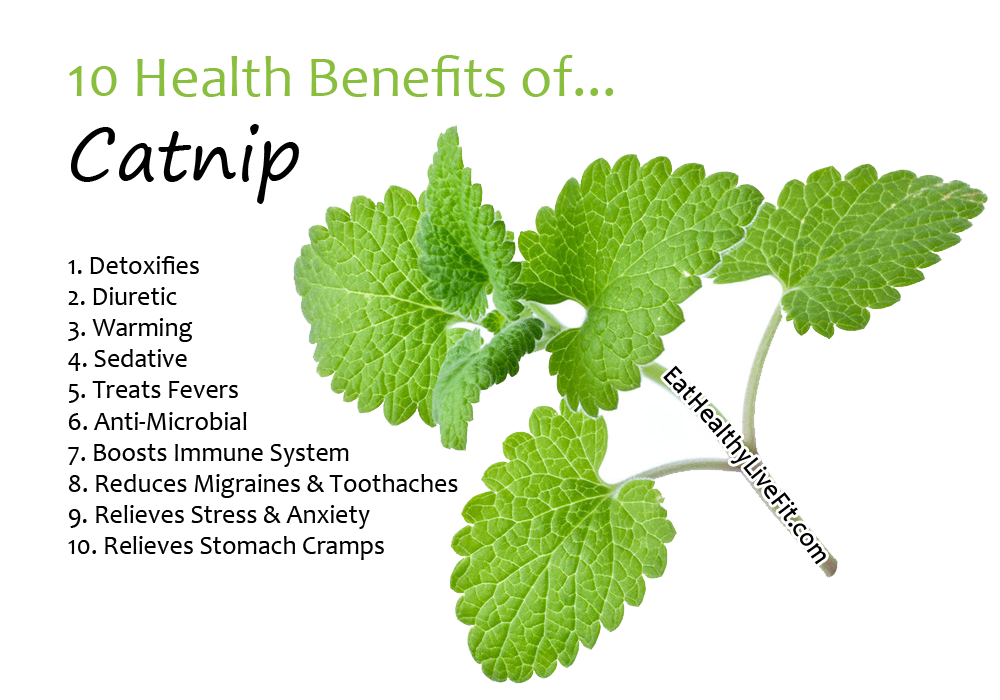 10 Health Benefits of Catnip | Eating Healthy Living Fit - EatHealthyLiveFit.com