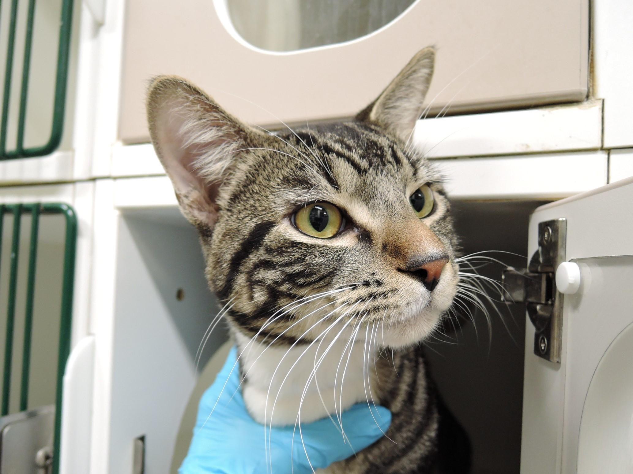 Widget A1096171 New York Animals Cat Shelter Adoption