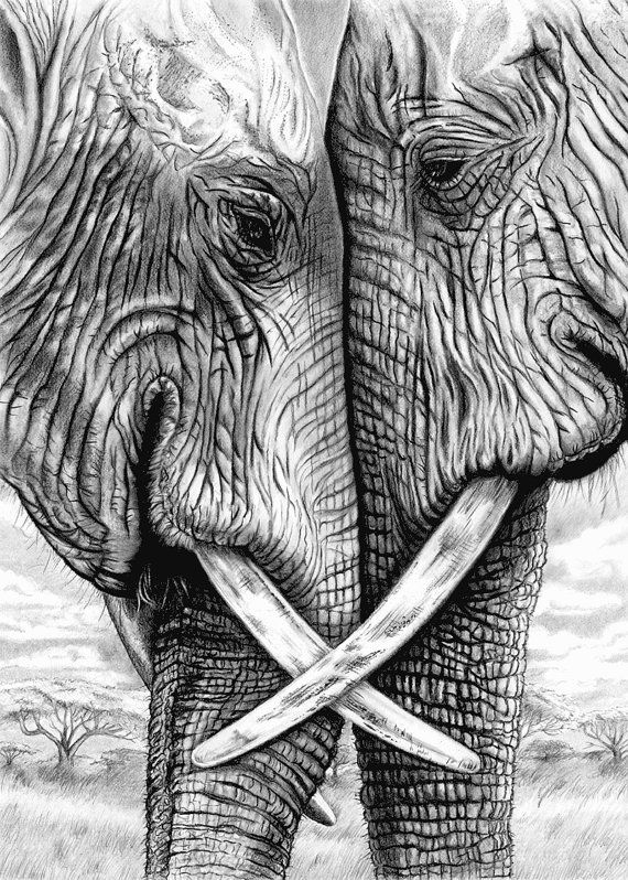 Elephants in pencil and charcoal 5 x 7 Giclee. Togetherness ...
