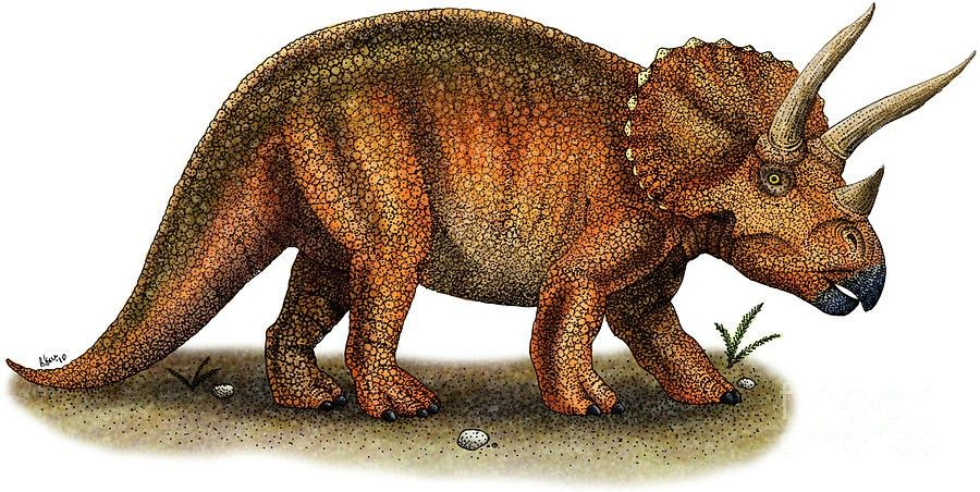 Image result for triceratops Dinosaurs names and