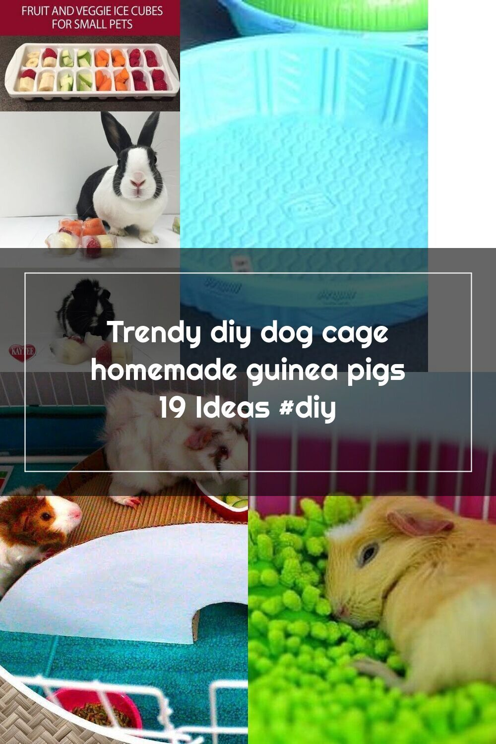 Pin On Guina Pig Ideas