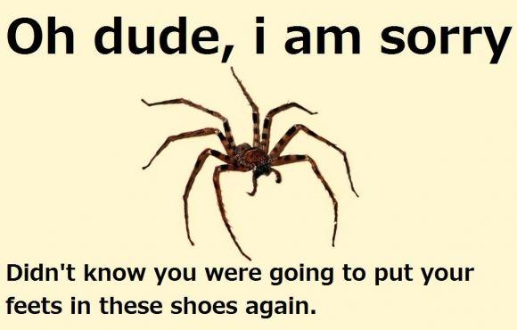 2967cf05f446d02a3d9efd2c319ff940 spider meme spider quotes, spider meme and meme