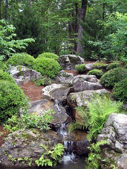 the soothing sound of a small waterfall or other water feature will enhance your woodland garden
