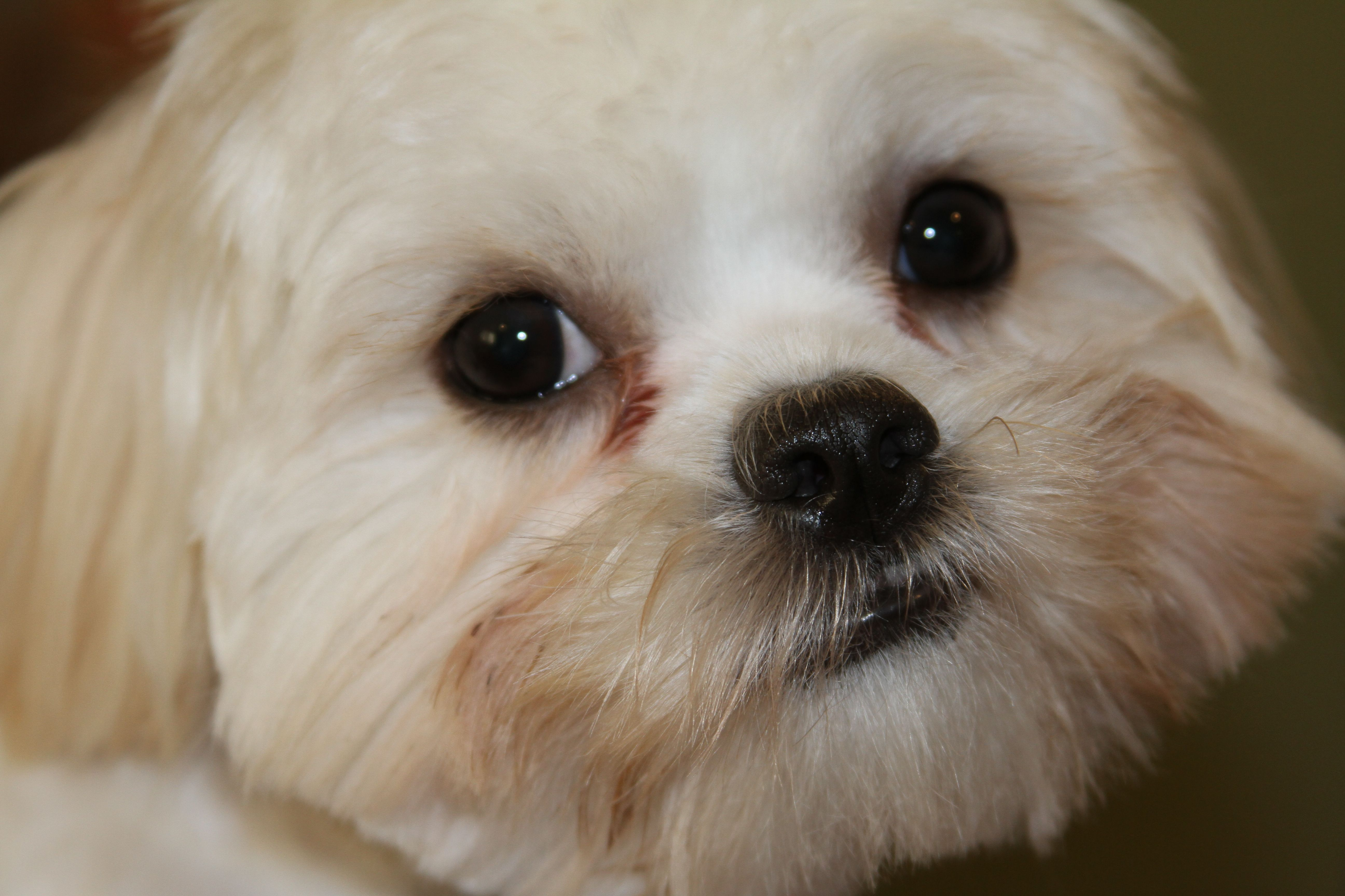 Everyone Who Has A Little White Dog Knows That It Is So Hard To