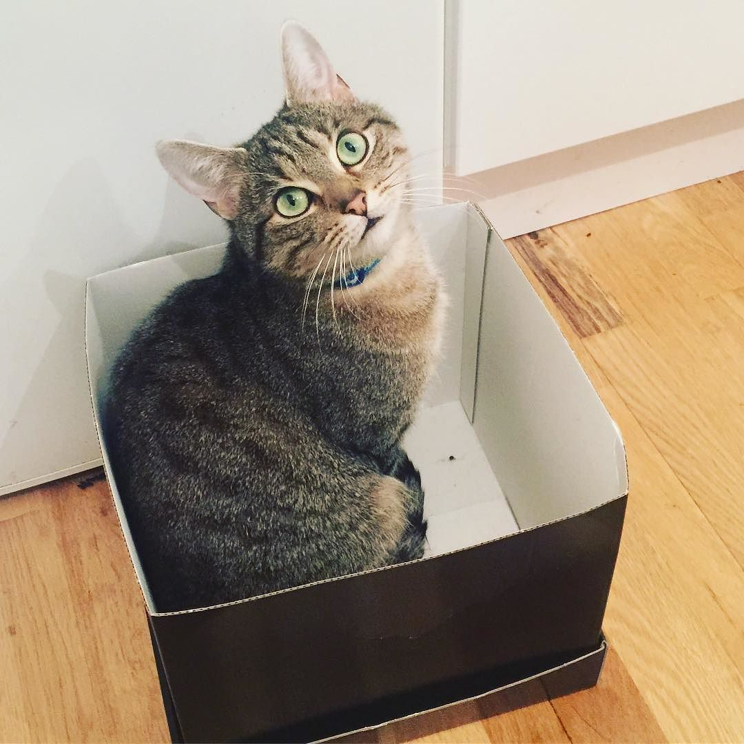 He Has This Thing With Boxes Cutewillis Cutekitty Kitten Catsofinstagram Microcat Catsinboxes Cute Cats Cats Kitten