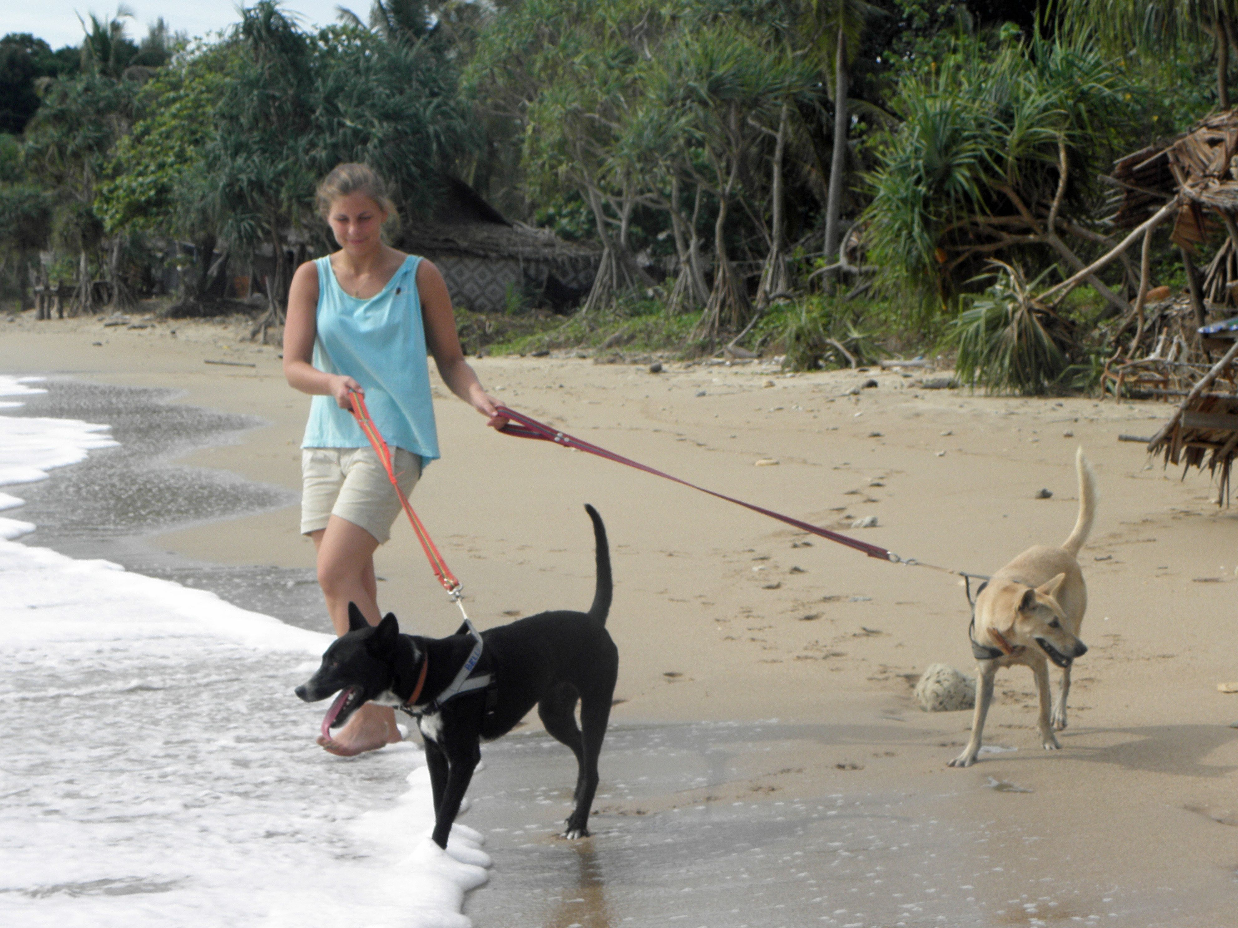 Support a Dog and Cat Rescue Centre on a tropical island in