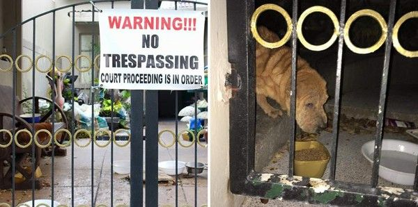 Woman Defies 'No Trespassing' Sign To Feed Dogs Left To Die