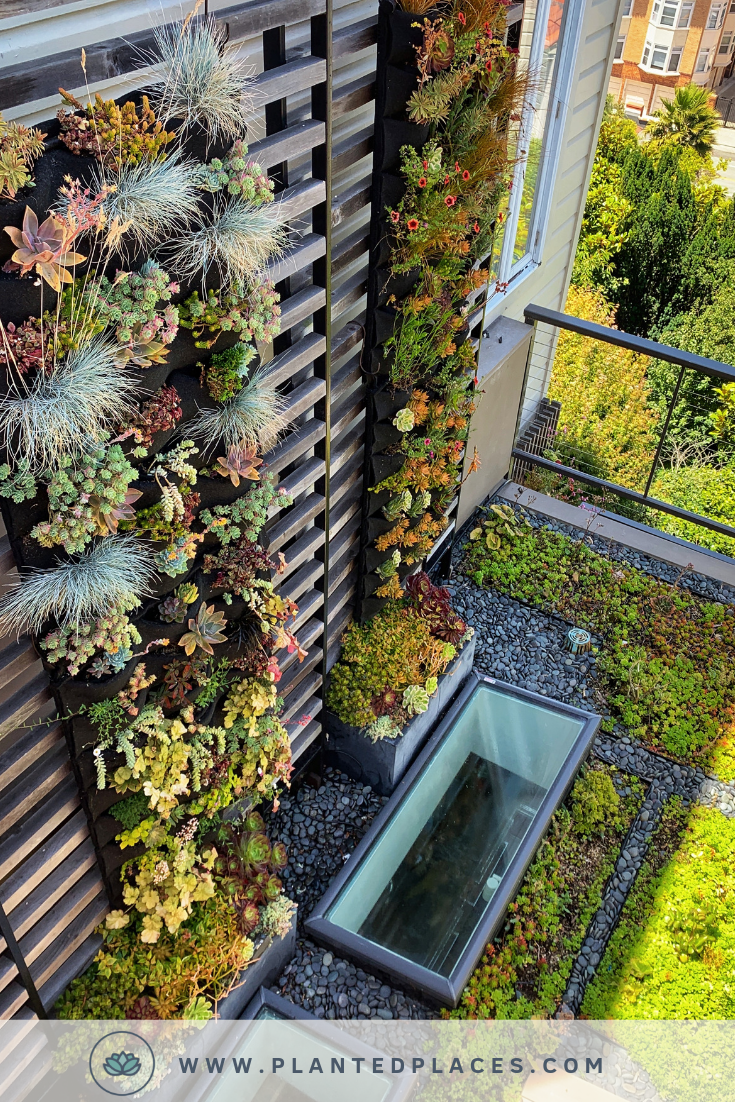 Planted Places Transforms Your Empty Interior Walls Into A Beautiful Art Piece With A Unique Living Wall De Vertical Garden Rooftop Garden Vertical Garden Wall