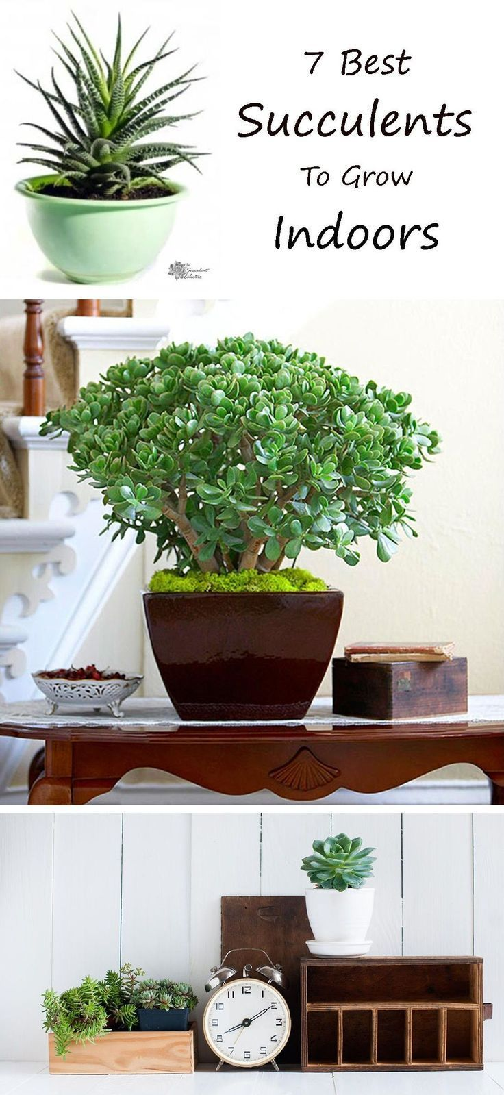 7 Super Simple Succulents to Grow Indoors