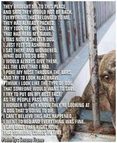 Saddest Poem Ever Please Adopt A Shelter Animal Advocate For Them By Spreading The Word That Shelter Dogs Need Love T Dog Poems Shelter Dogs Animal Rescue