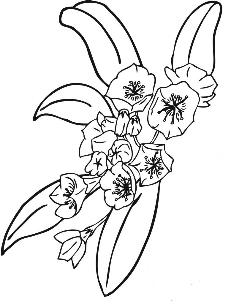 printable pictures of flowers to color  Flower Coloring Pages