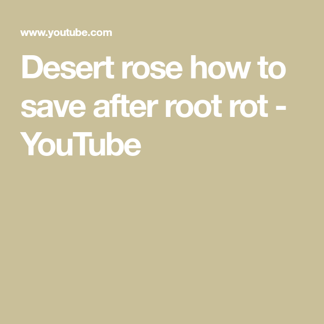Desert Rose How To Save After Root Rot Youtube Desert Rose Rot Rooting Roses
