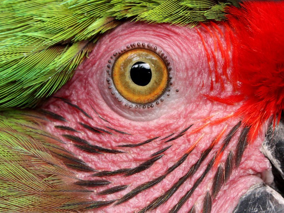 Wallpaper National Geographic For Bird Wallpapers Parrot Bird Wallpaper Beautiful Birds