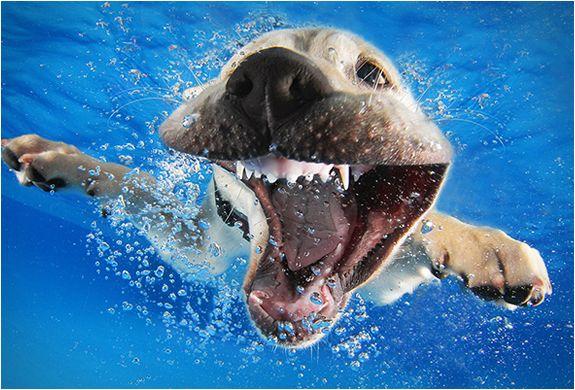 seth-casteel-underwater-puppies-8.jpg