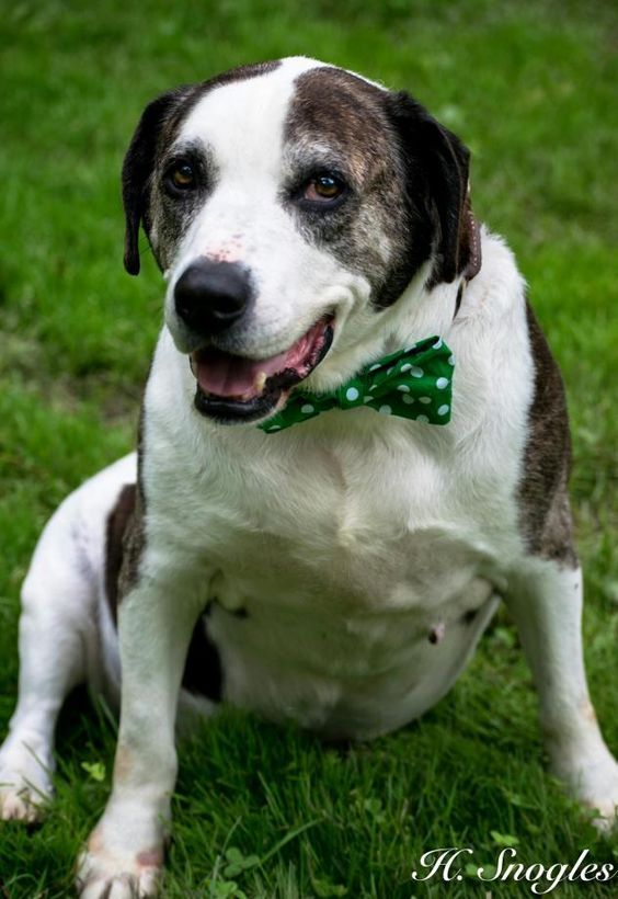 Adopt Diesel NO ADOPTION FEE on Save a dog, Humane