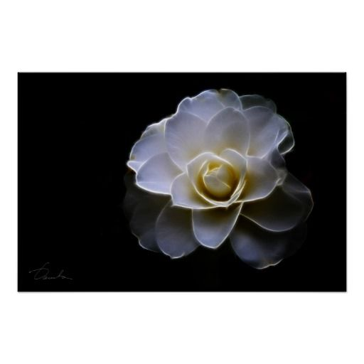 ==>>Big Save on          	white camellia color poster           	white camellia color poster online after you search a lot for where to buyHow to          	white camellia color poster Here a great deal...Cleck Hot Deals >>> http://www.zazzle.com/white_camellia_color_poster-228913704747612509?rf=238627982471231924&zbar=1&tc=terrest