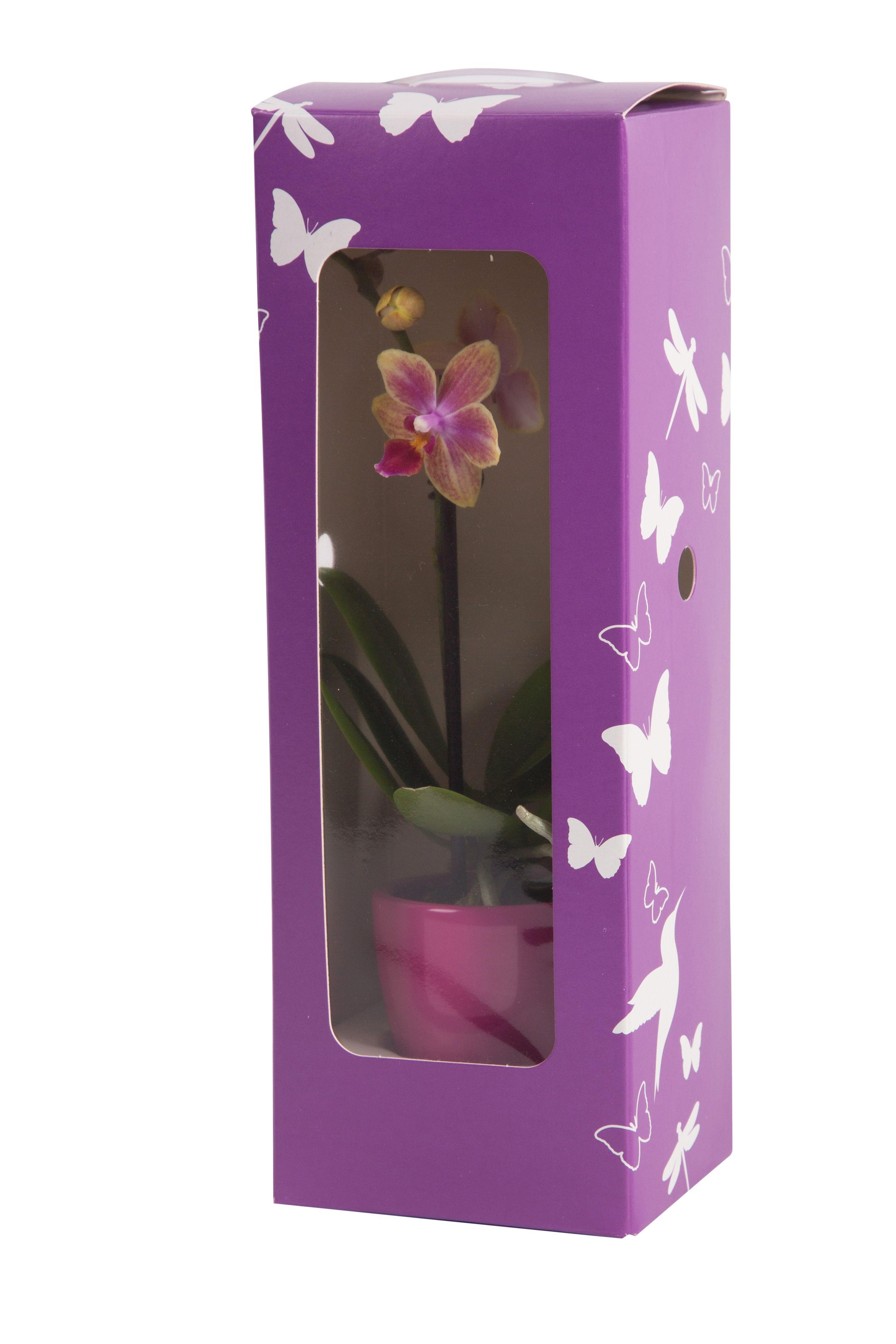 Van Der Windt Packaging Ltd 포장 꽃 화분