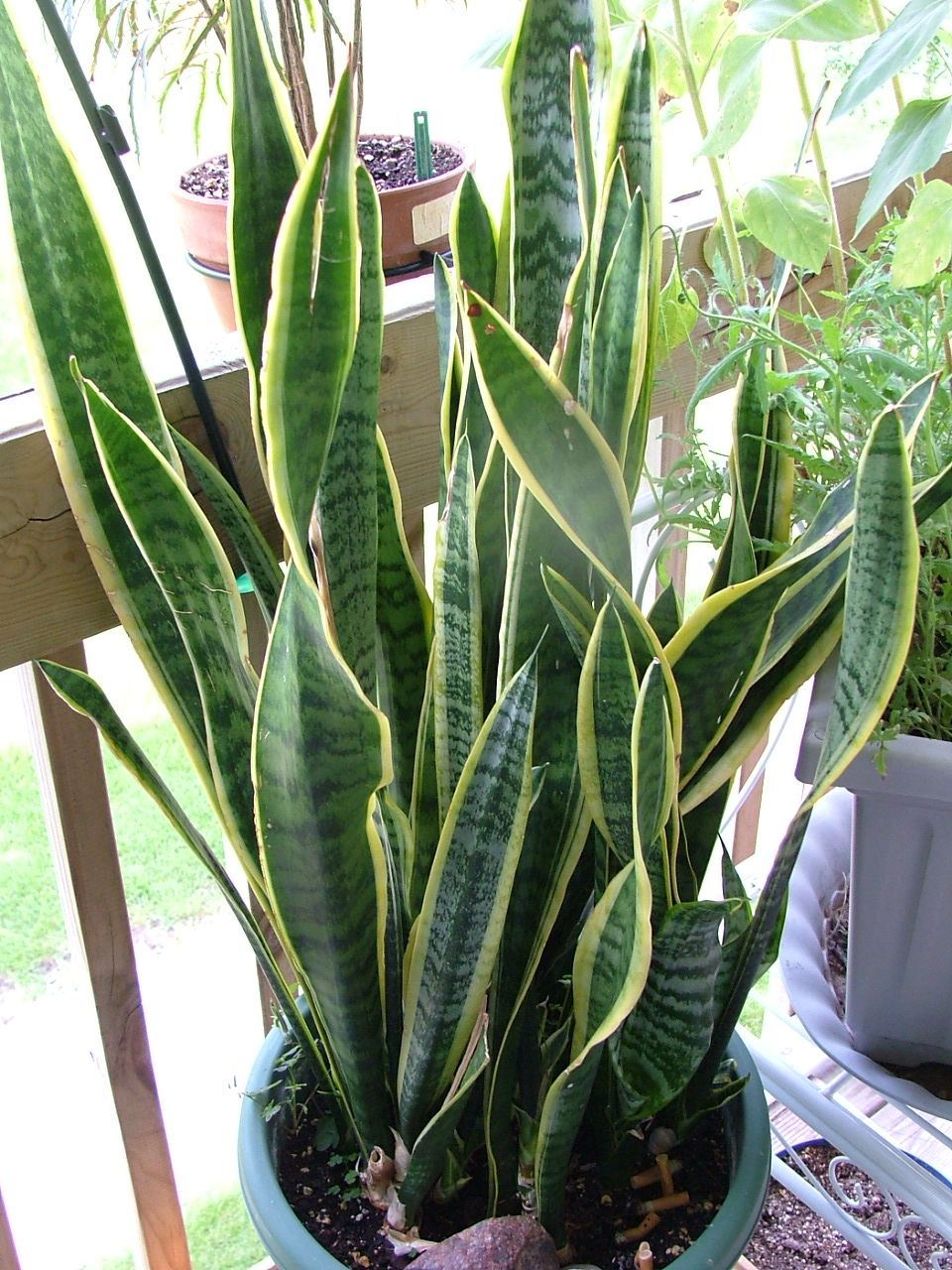 House Plants Identify By Pic | Tropical Plants That Grow Very Well In Your  Home,