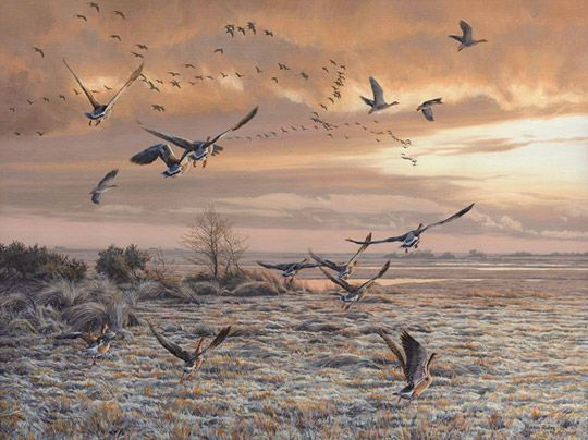 Martin Ridley Art Wildlife Art Original Oil Paintings
