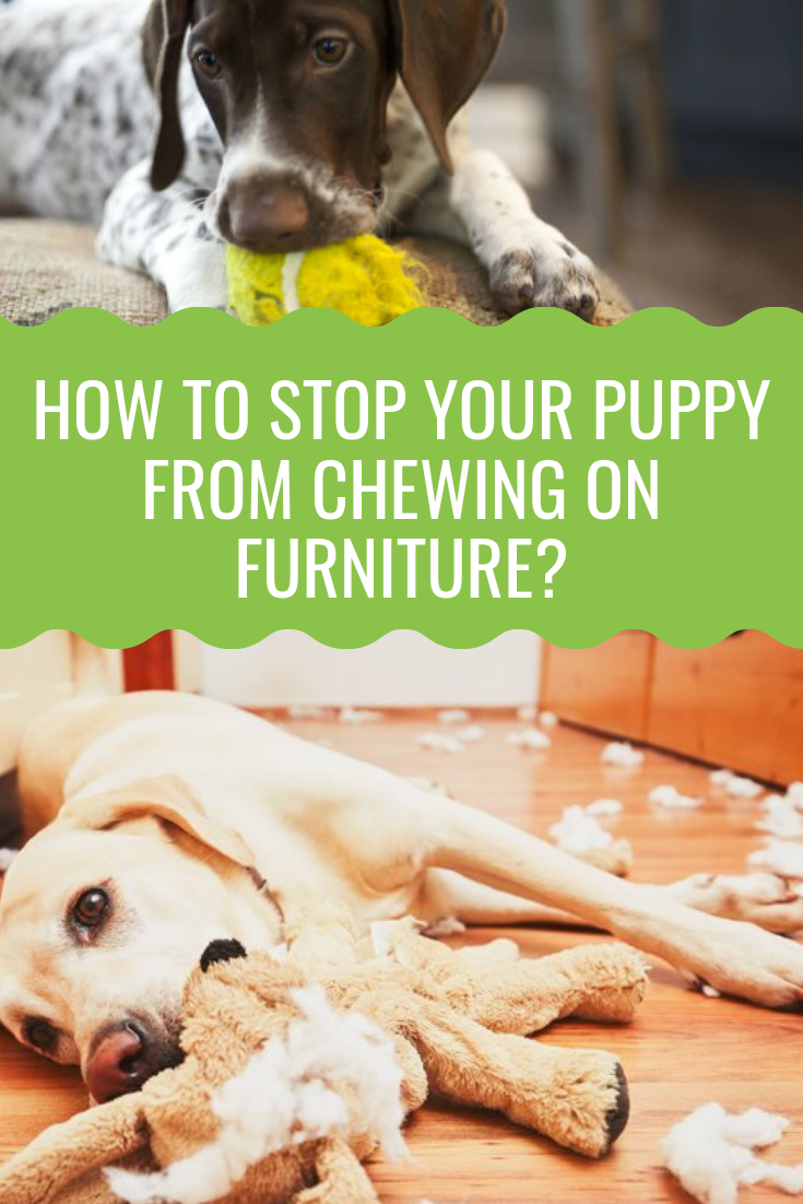 How To Stop A Dog From Chewing The Definitive Guide Dogs Puppies Dog Behavior