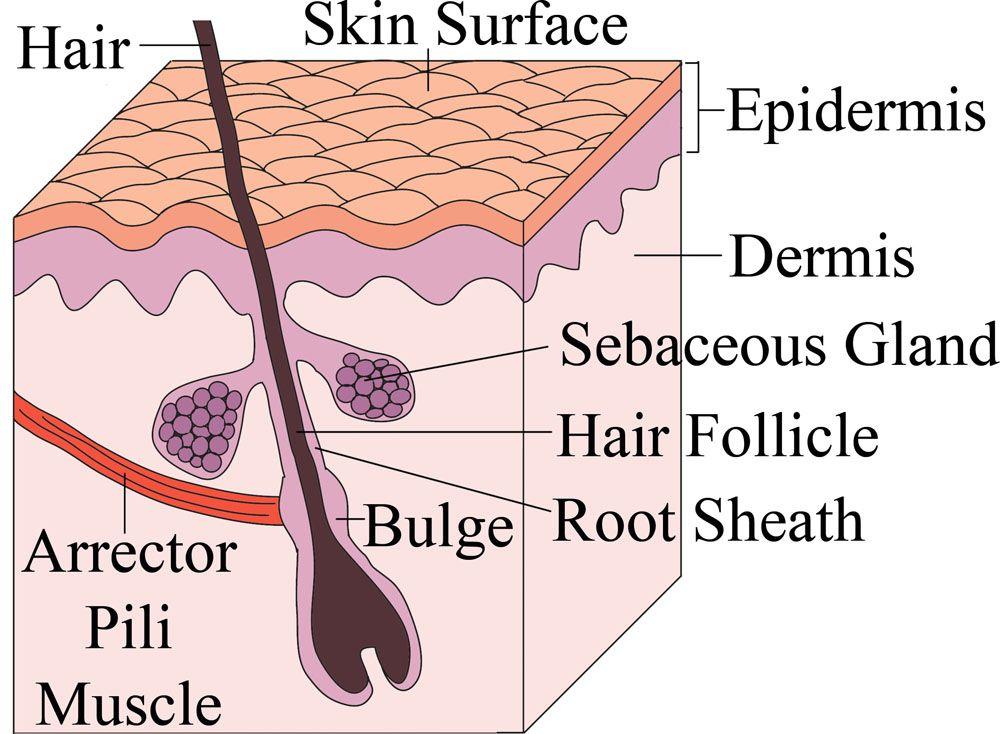 Under Skin Diagram Wiring Library