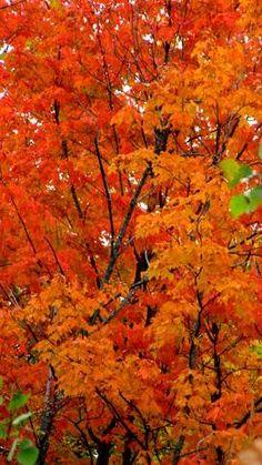 Bright Orange Color Palette